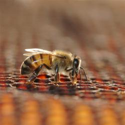 کانال فروش عسل طبیعی