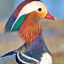 کانال پرندگان سوادکوه