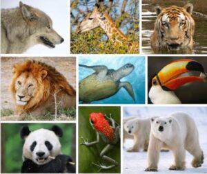 کانال حیوانات