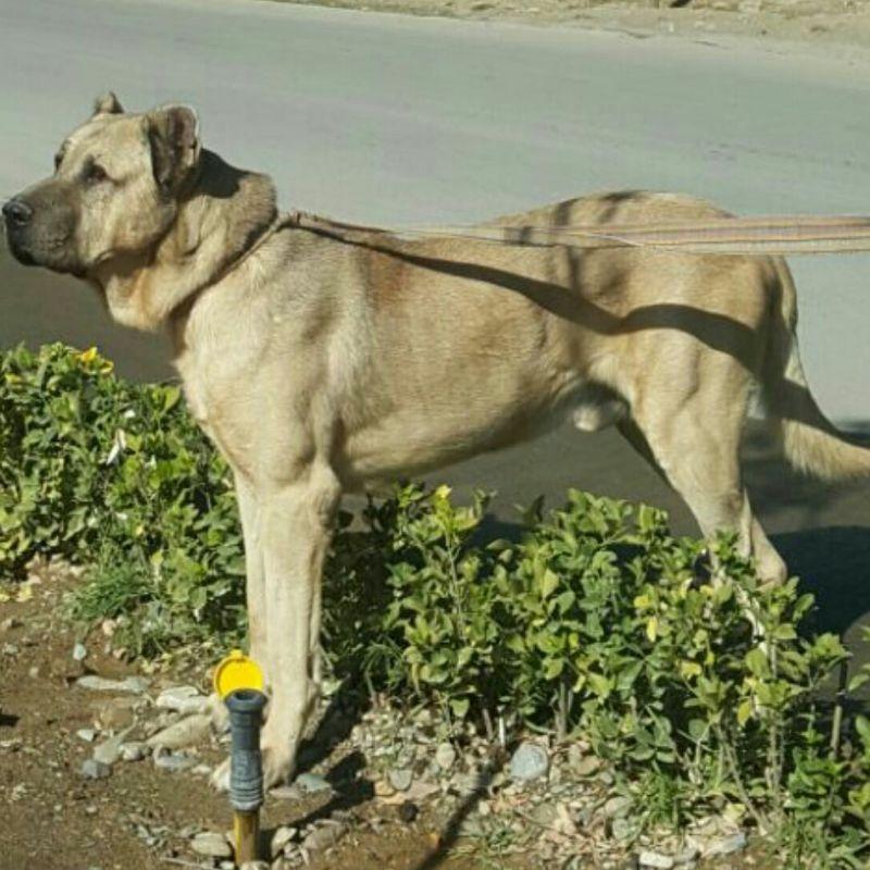 کانال روبیکا سگ بازان